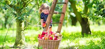fruit tree care utah