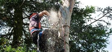 Utah Tree Trimming