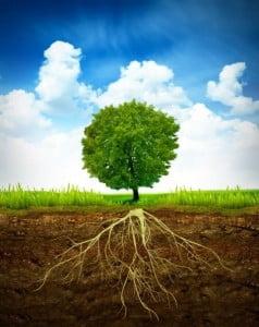 Deep Root Feeding Image