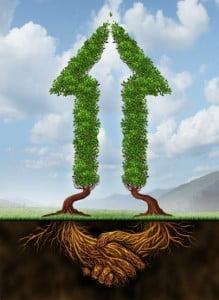 mycorrhizae image
