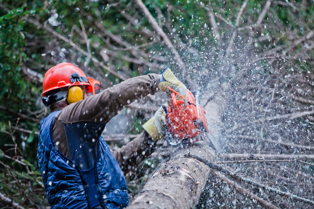 Avoid Tree Trimming Mistakes