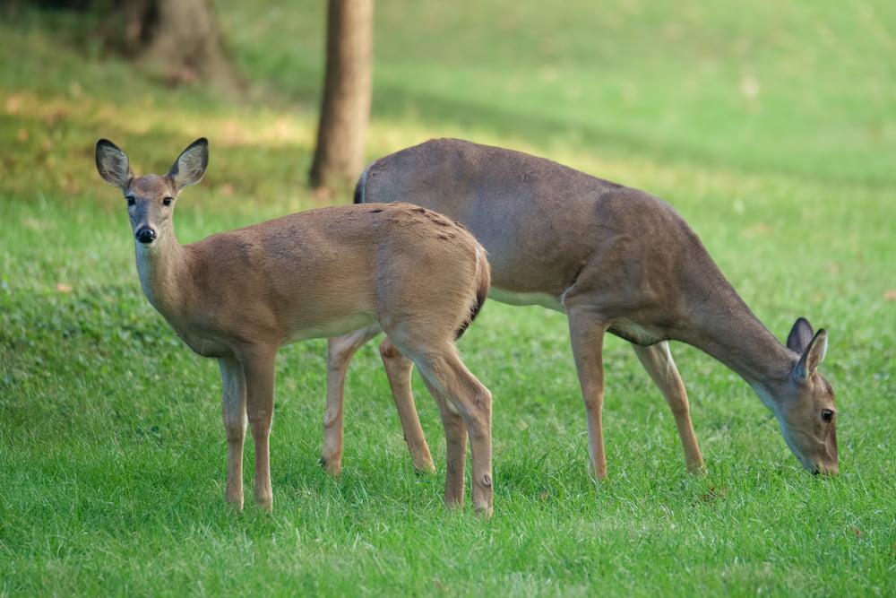 Deer Tree Service