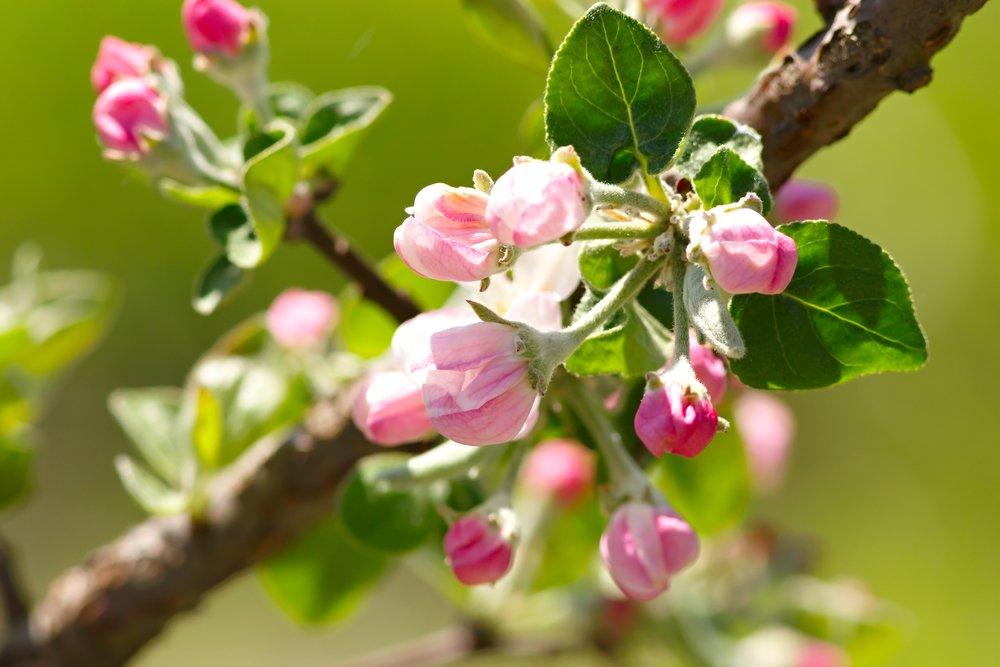 Tree Not Producing Fruit