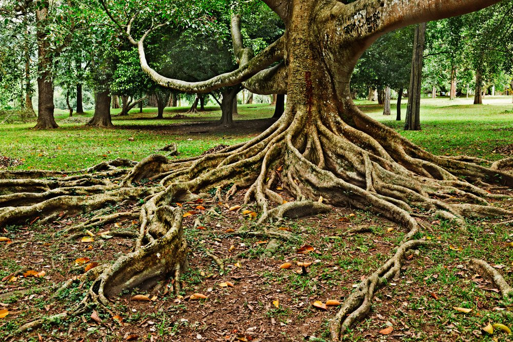 Tree Root Services