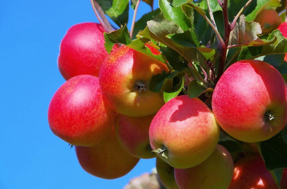 fruit tree care