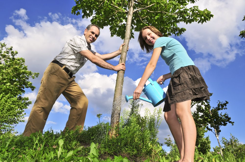 Planting Trees for Energy Efficiency