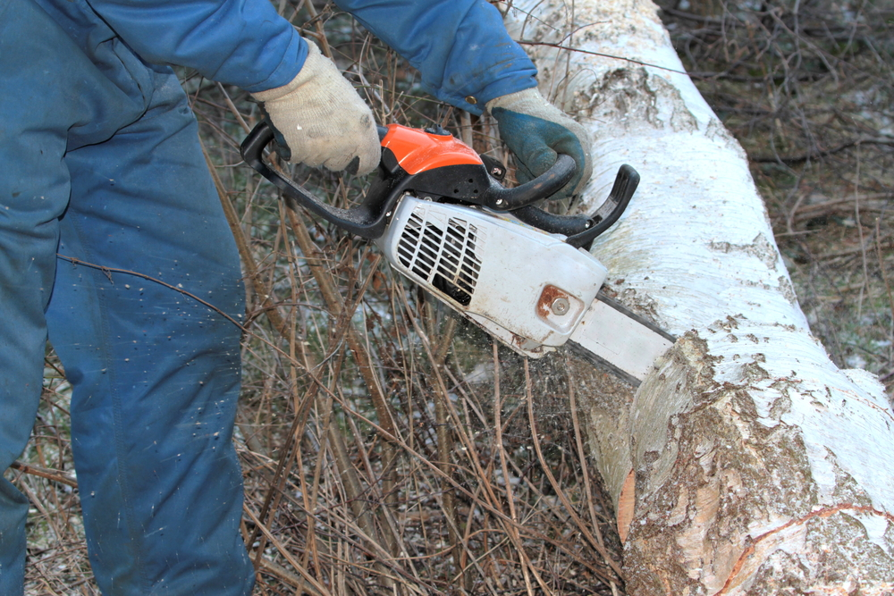 Tree Services During the Winter