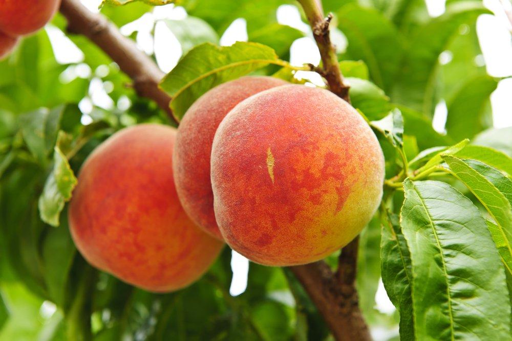 Winter Fruit Tree Care