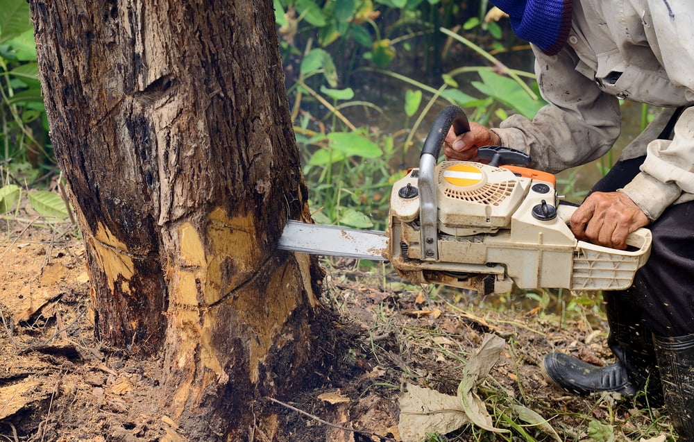 Tree Removal Costs in Northern Utah