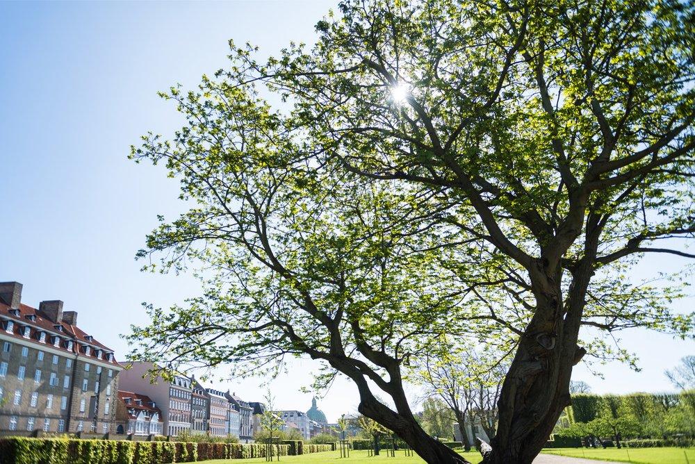 utah tree services