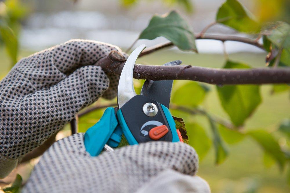 fall tree pruning Utah