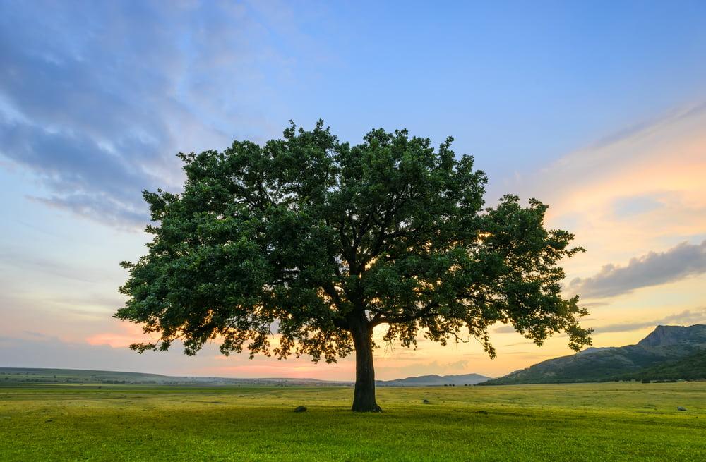 Peeling Tree Bark Arborist