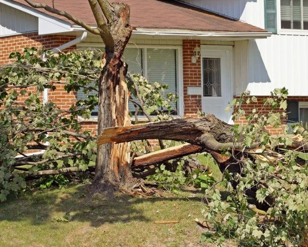 falling trees property damage
