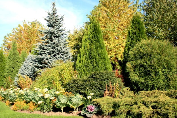 practical value evergreen trees