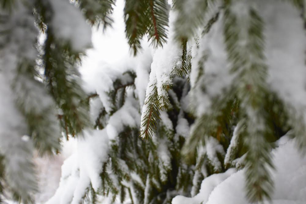 avoiding tree risks winter