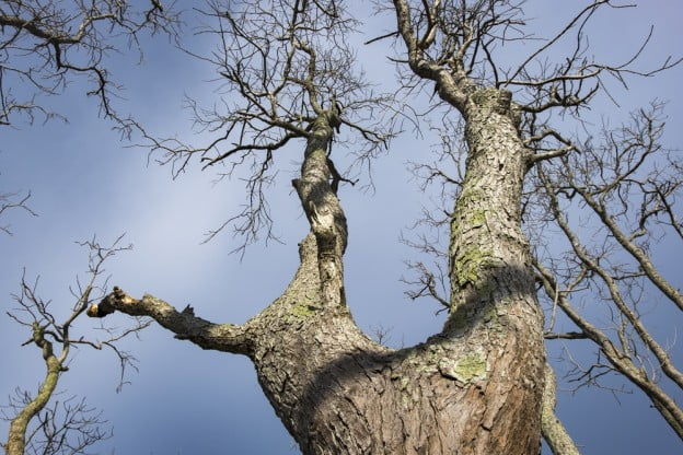 risks delaying dead tree removal