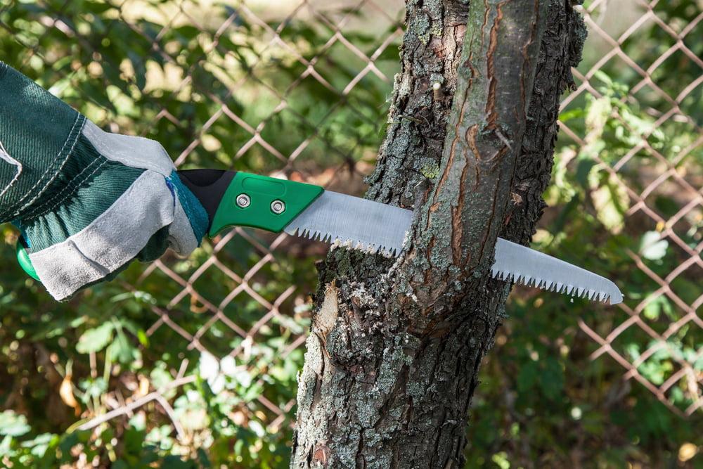 tree pruning mistakes avoid