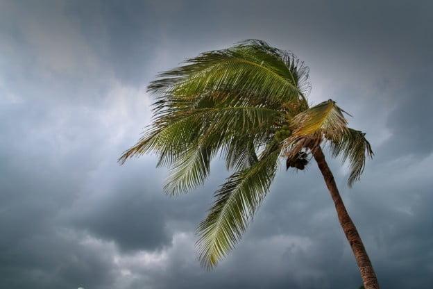 trees prepared storm risks