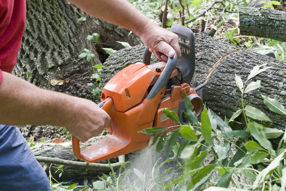 determining right time tree removal