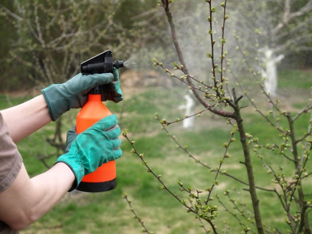 tree aphid issues control