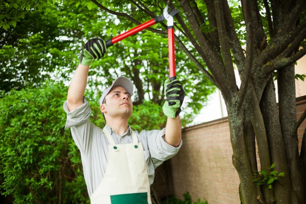 tree pruning frequency impact frequency