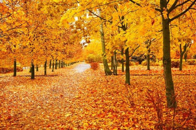 tree species autumn views