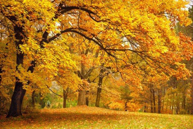 tree species beautiful autumn
